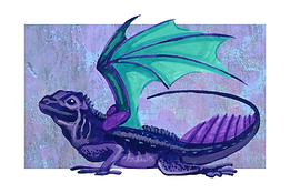 Sail-fin Dragon