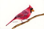 s cardinal011.jpg