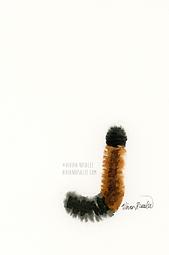 Wooly Bear Caterpillar Ink Painting
