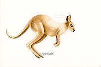 Kangaroo Ink Painting