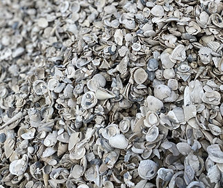 Small Washed Sea Shells.jpg