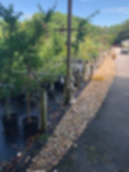 small river rock driveway