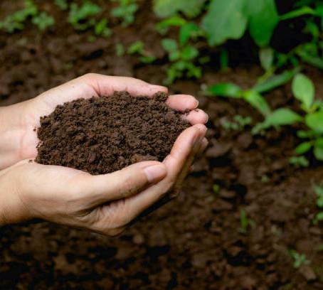 The Future of Soil