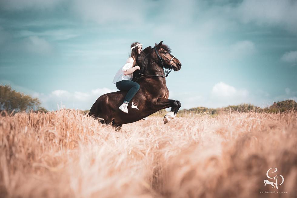 Un bien joli cabré sur demande dans les blés!  Petite recommandations pour ceux qui souhaitent ce type de photos: pensez à demander les autorisations aux agriculteurs, et de rester dans les sillons des tracteurs afin de ne pas abîmer les cultures ;)