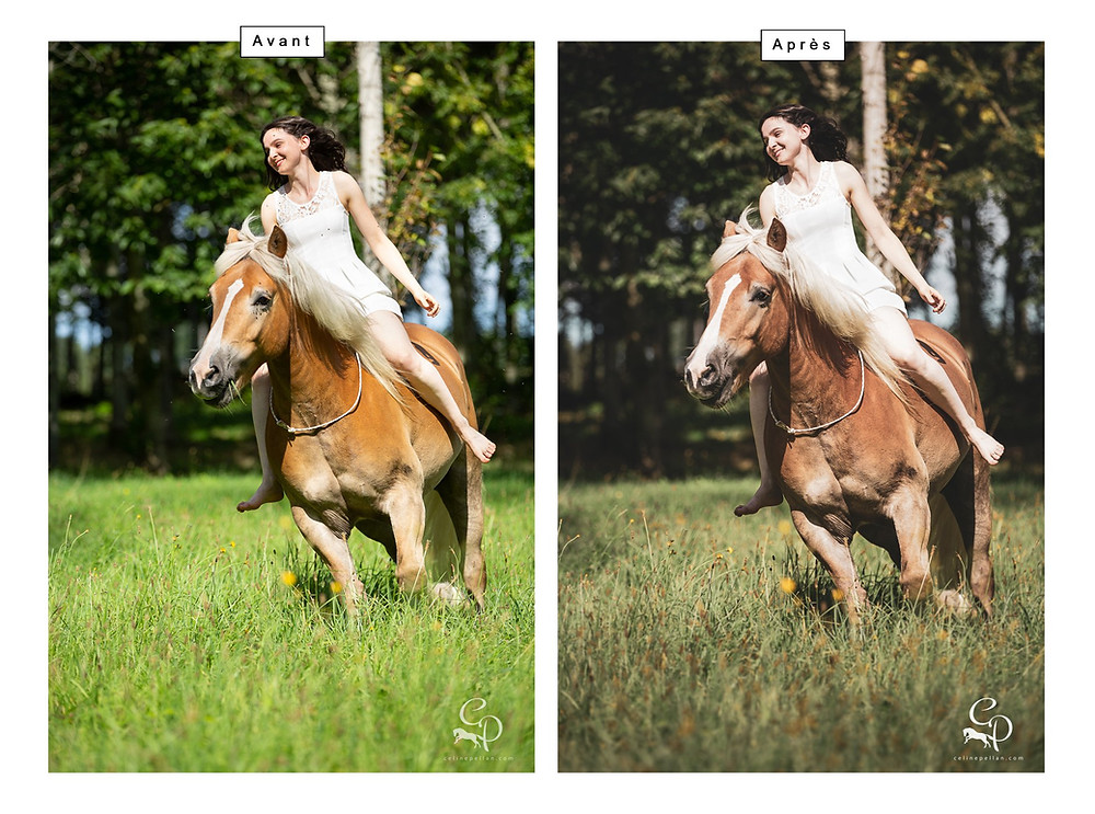 Traitement de la lumière, couleurs, contrastes avec LR,: mouches, brins d'herbe et montage avec Photoshop