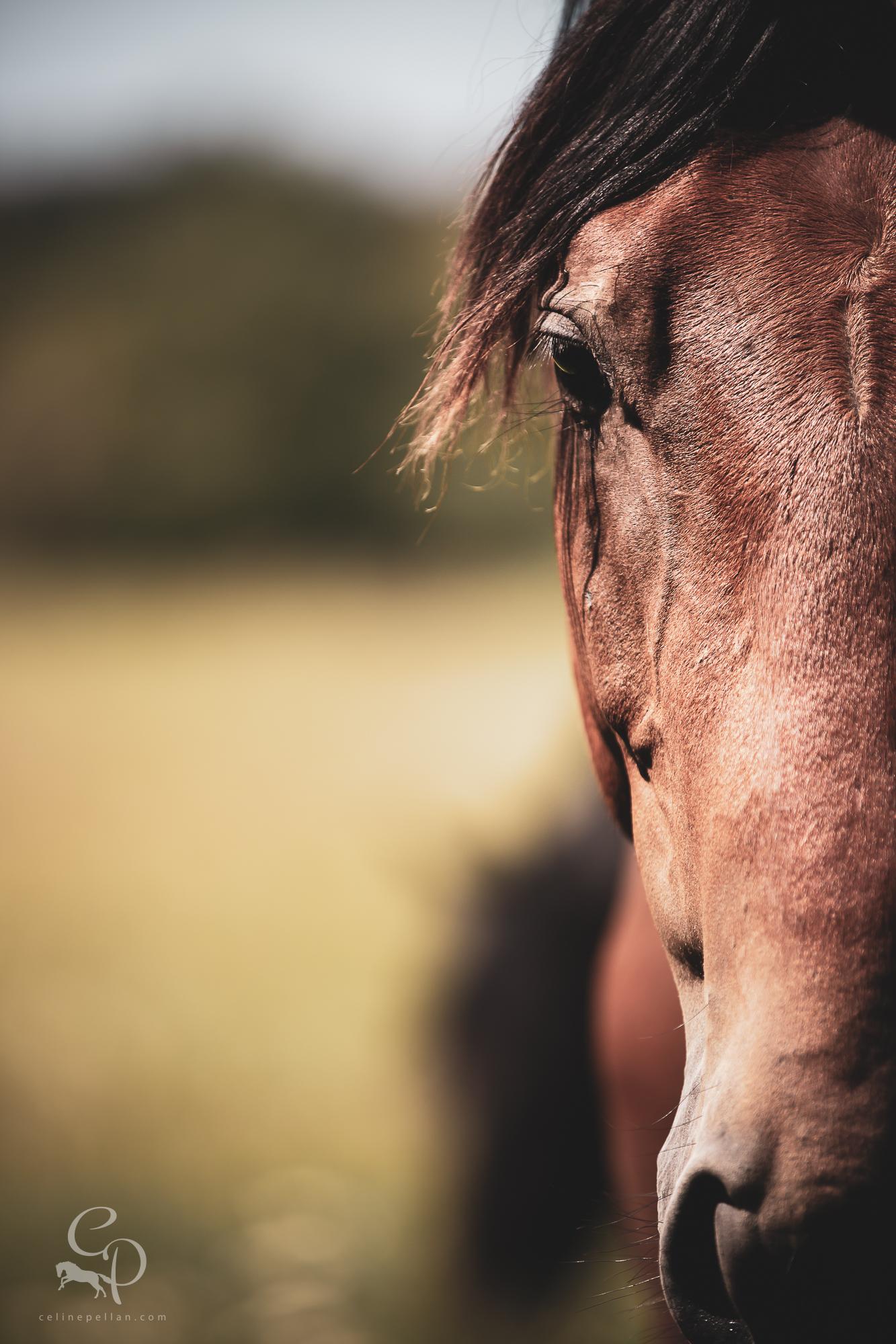 Soins du cheval / Artisanat