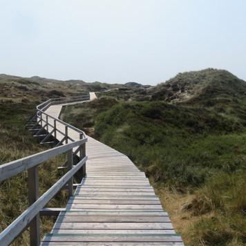 Insel Amrum Schleswig-Holstein