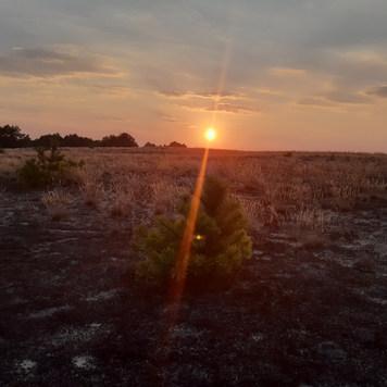 Lieberoser Wüste Brandenburg