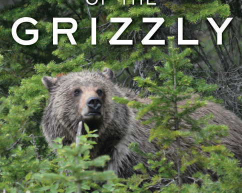 Cheney Sponsors Bill That Would Remove Yellowstone Region's Grizzlies From Federal Protection
