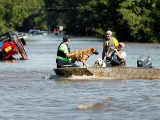 Hurricane Harvey: Preparing for Evacuation