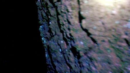 time-scam_forest_videostill-2.20w-.jpg