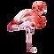 Flamingo%201_edited.png