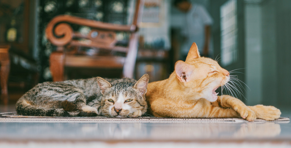 adorable-animals-cats-1386422.jpg
