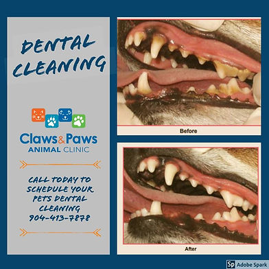 dental image.jpg