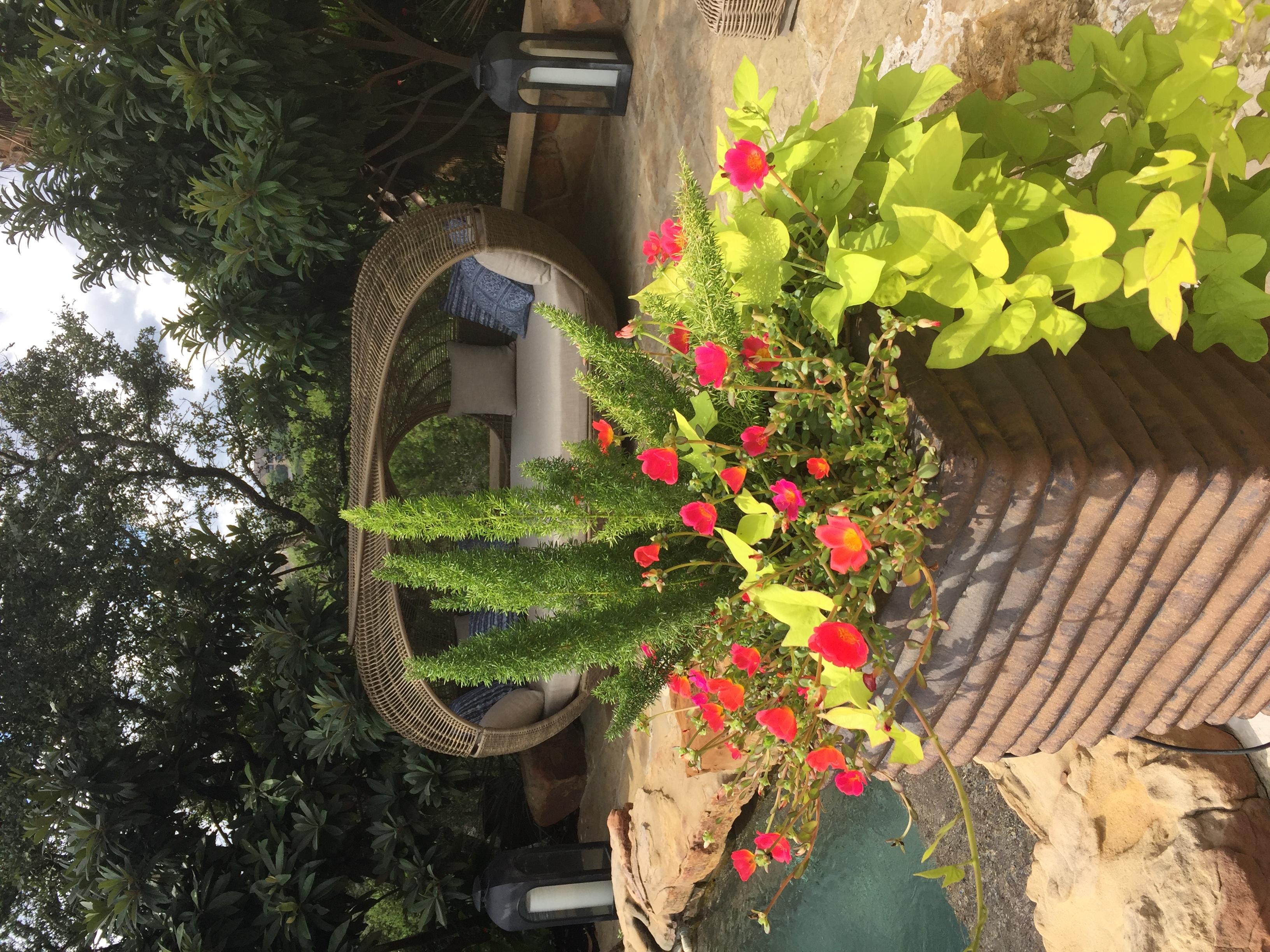 tropical pool pots
