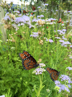 butterfly favorites