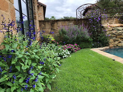 Courtyard black and blue salvia