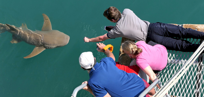 Talbot Bay Shark Feeding