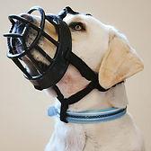baskerville-ultra-dog-muzzle.jpg
