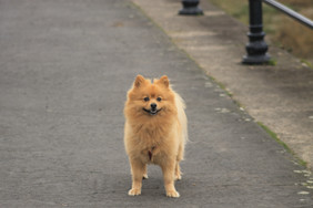 Dog, Morecambe Bay