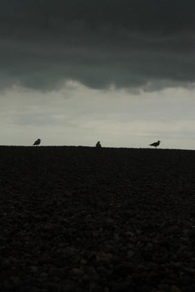 Seagulls on the Horizon