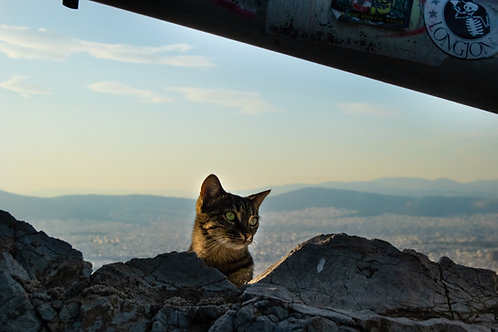 Cat of Athens - A3 Print