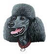 yellow poodle3.png