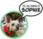 My Name is Sophie.png