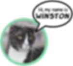 My Name is Winston.png