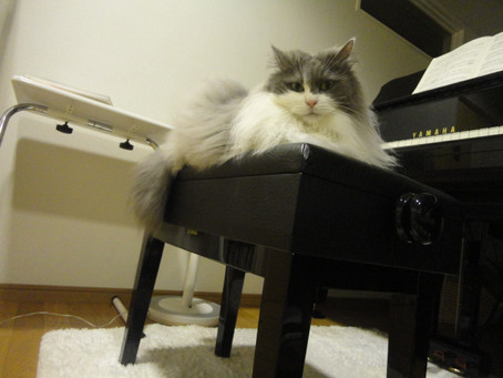 「ピアノを習う時の楽器について」電子ピアノやキーボードでもOKなの?