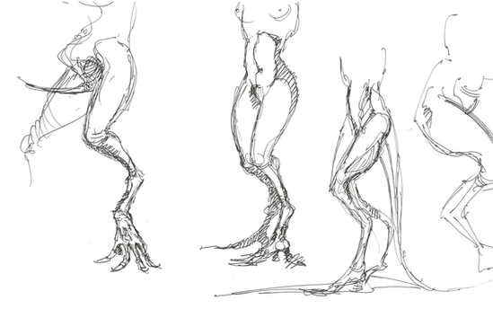 Dren Lower Limbs.png