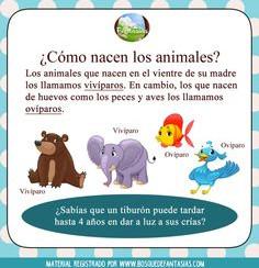 animales2.jpg