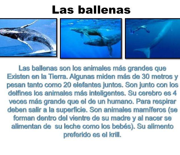 las ballenas.jpg