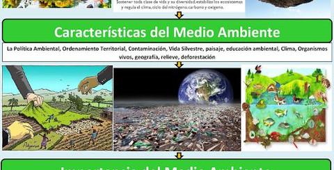 medio ambiente2.jpg