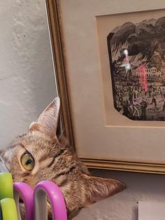 Studio Cat Tallulah Belle and the scissors