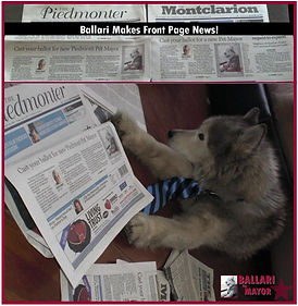 Ballari  the Siberian Husky in the news.June 2013. Sarah Kidder's dog. L'Atelier D'Ambiance