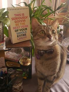 2020 and Tallulah Belle, Studio Cat