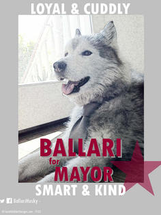 Ballari for pet mayor by Sarah Kidder of L'Atelier D'Ambianceor twitter.png