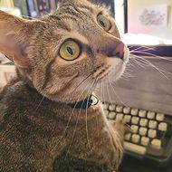 Tallulah Belle the cat typing.jpg