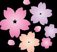 桜の花びら06.png