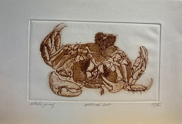 IMG_2868Upturned_Crab,_Artist's_Proof,