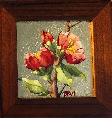 Quince Blossome III (miniature)