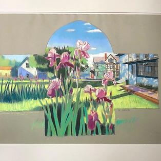 School Lane Irises