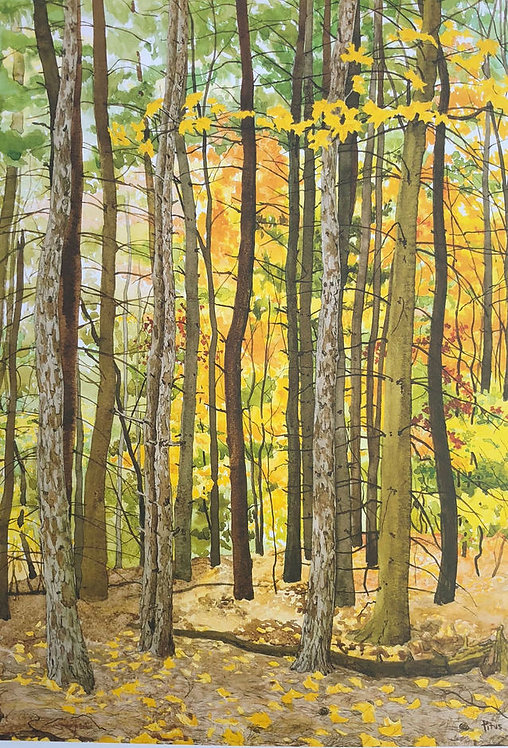 Autumn Woods- Signed Print
