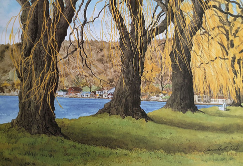 Three Old Willows