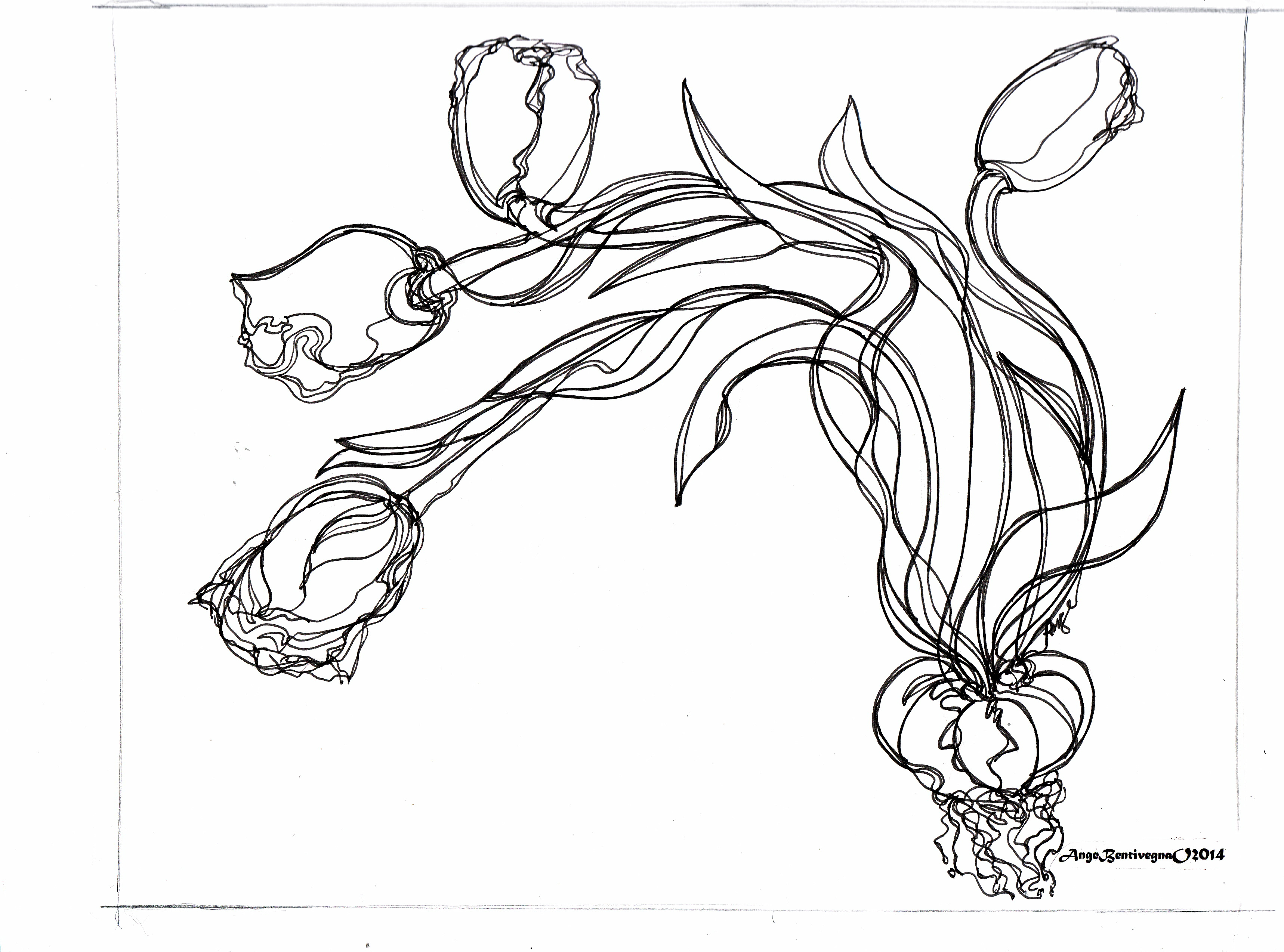tulipscopyrignt