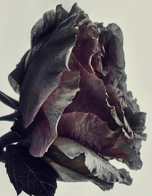 Floral Beauty_Sh 10_1768 v1.jpg