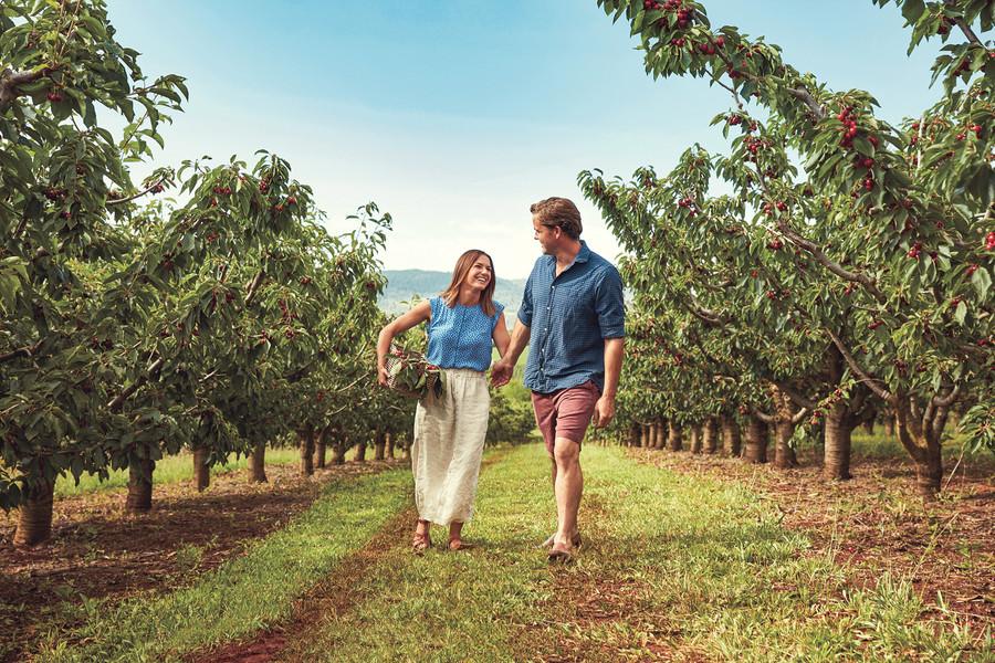Borrodell Vineyard 3 Cherry Picking PRIN