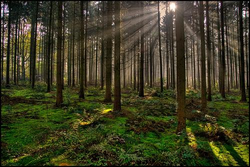 trees-forest-sun.jpg