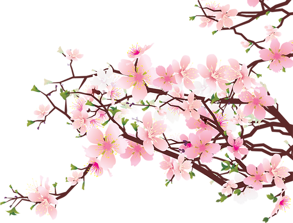 Cherry-blossoms.png